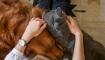 现在的零售商有一个绝佳的机会来展示宠物护理产品