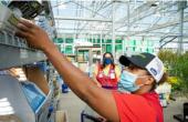 Lowes Cos得益于其家庭专业客户基础的销售额大幅上升